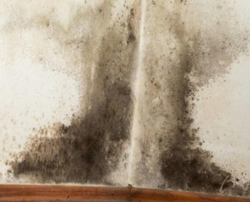 eksempel på skimmelsvamp